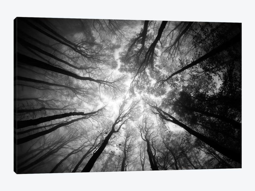 Tree Tops by Ajven 1-piece Canvas Art