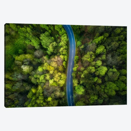 Road In The Forest Canvas Print #OXM2679} by Alfonso Maseda Varela Canvas Art Print