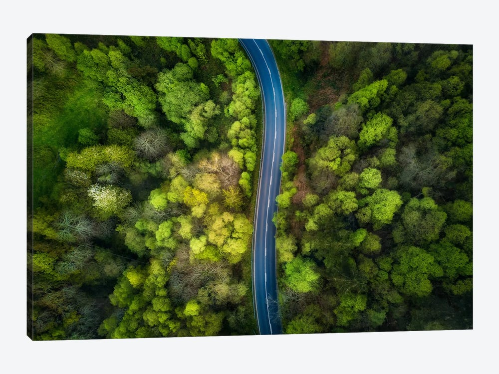 Road In The Forest by Alfonso Maseda Varela 1-piece Art Print