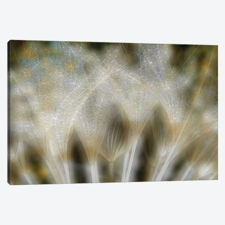 Fireworks Nature Canvas Print #OXM267} by Thierry Dufour Art Print