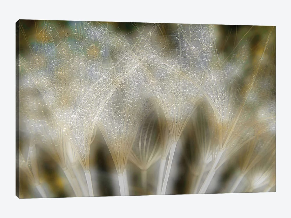 Fireworks Nature by Thierry Dufour 1-piece Canvas Print
