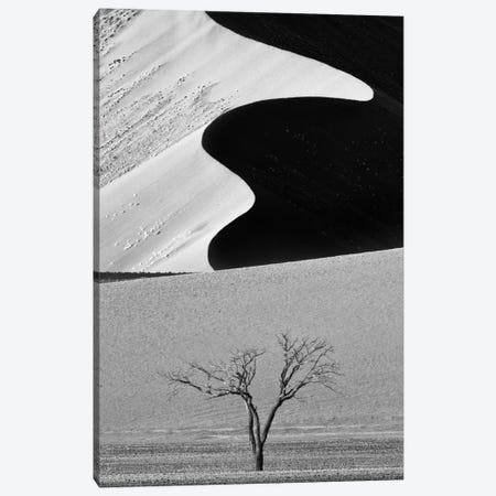 Dune Curves Canvas Print #OXM2681} by Ali Khataw Canvas Art