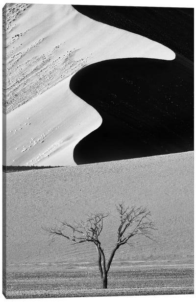 Dune Curves Canvas Art Print