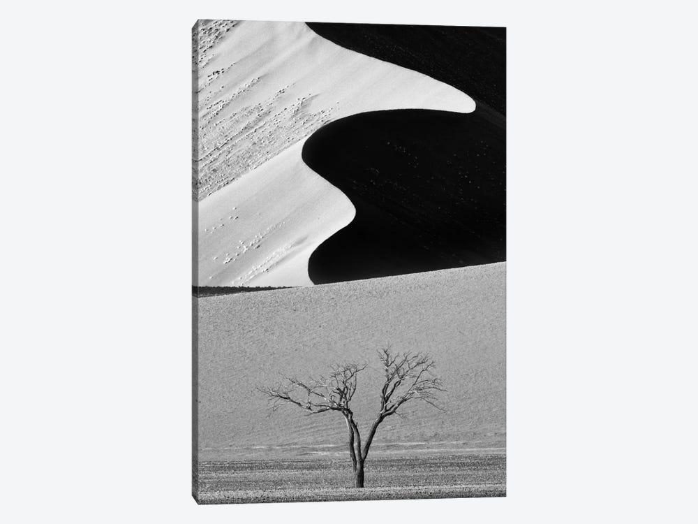 Dune Curves by Ali Khataw 1-piece Canvas Wall Art