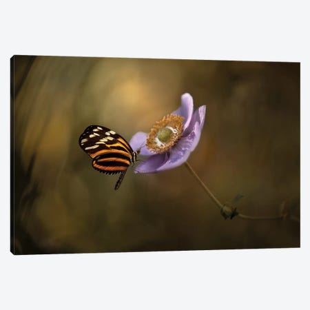 Lightness Of Being Canvas Print #OXM26} by Heather Bonadio Canvas Artwork