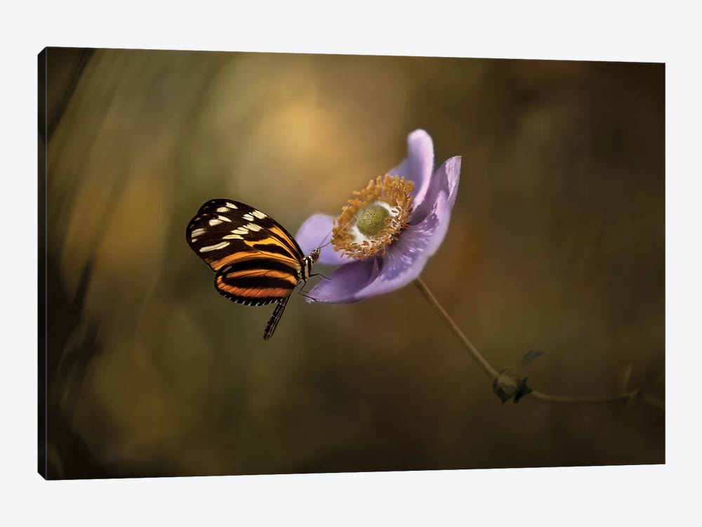 Lightness Of Being by Heather Bonadio 1-piece Canvas Artwork