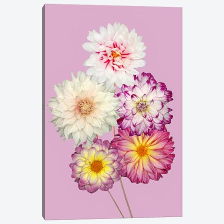 Dahlias Canvas Print #OXM2707} by Brian Haslam Canvas Art