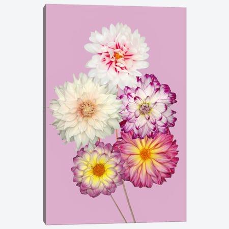 Dahlias 3-Piece Canvas #OXM2707} by Brian Haslam Canvas Art