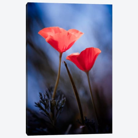 Desire Canvas Print #OXM2727} by Fabien Bravin Canvas Art