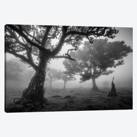 Tree Study 1 Canvas Print #OXM2745} by Istvan Nagy Canvas Art