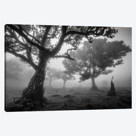 Tree Study 1 Canvas Print #OXM2745} by Istvan Nagy Canvas Art