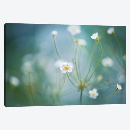 Rock Jasmine Canvas Print #OXM2751} by Jacky Parker Canvas Artwork