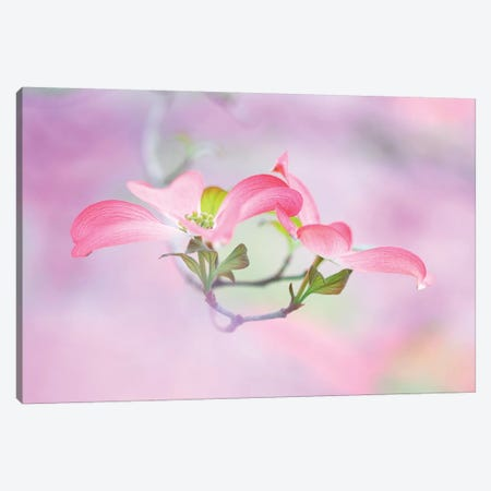Dogwood Canvas Print #OXM2754} by Jane Canvas Print