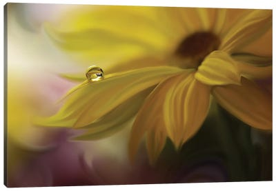 Sunbeam... Canvas Art Print