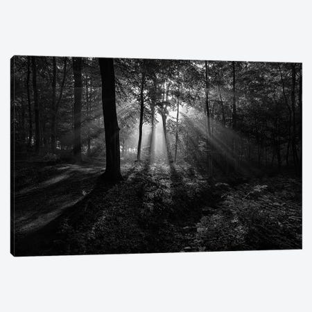 A Sunny Morning Canvas Print #OXM2771} by Leif Løndal Canvas Artwork