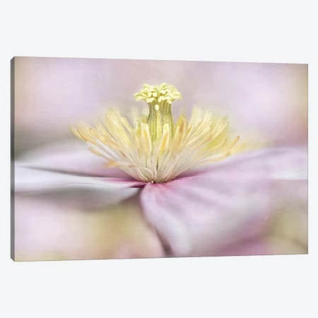 Montana Canvas Print #OXM2781} by Mandy Disher Art Print