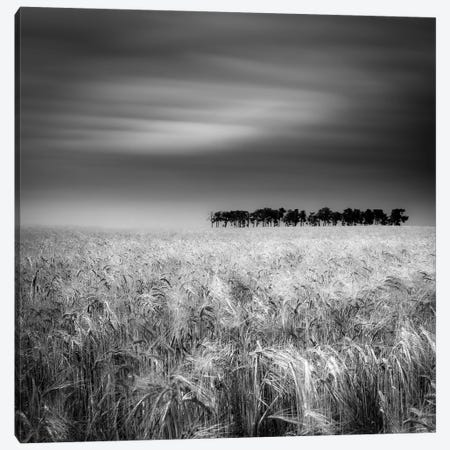 Tierra De Pan Canvas Print #OXM2785} by Marco Antonio Cobo Canvas Wall Art