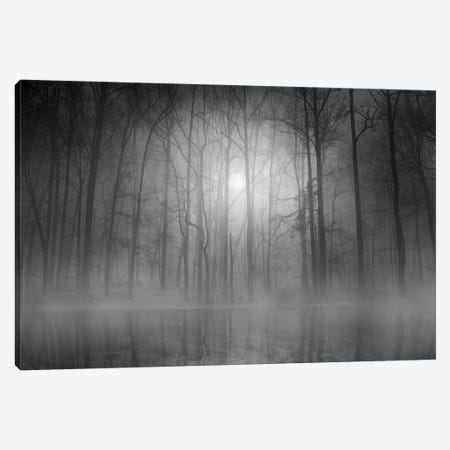 Morning Mist Canvas Print #OXM279} by Beth Lutz Canvas Print