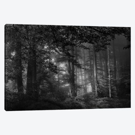 See Into The Trees Canvas Print #OXM2809} by Norbert Maier Canvas Artwork
