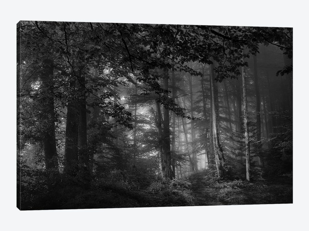 See Into The Trees by Norbert Maier 1-piece Canvas Print