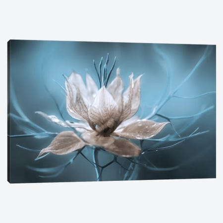 Nigella I Canvas Print #OXM280} by Mandy Disher Canvas Art