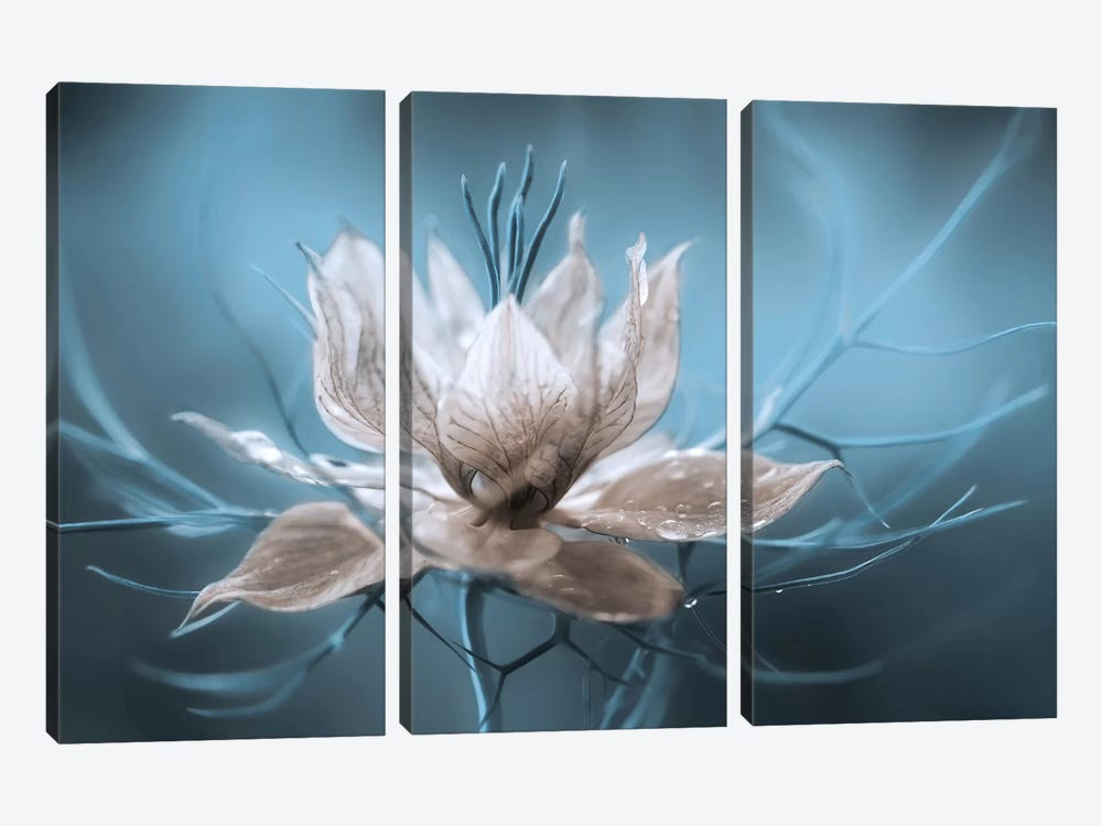 Nigella I by Mandy Disher 3-piece Canvas Artwork