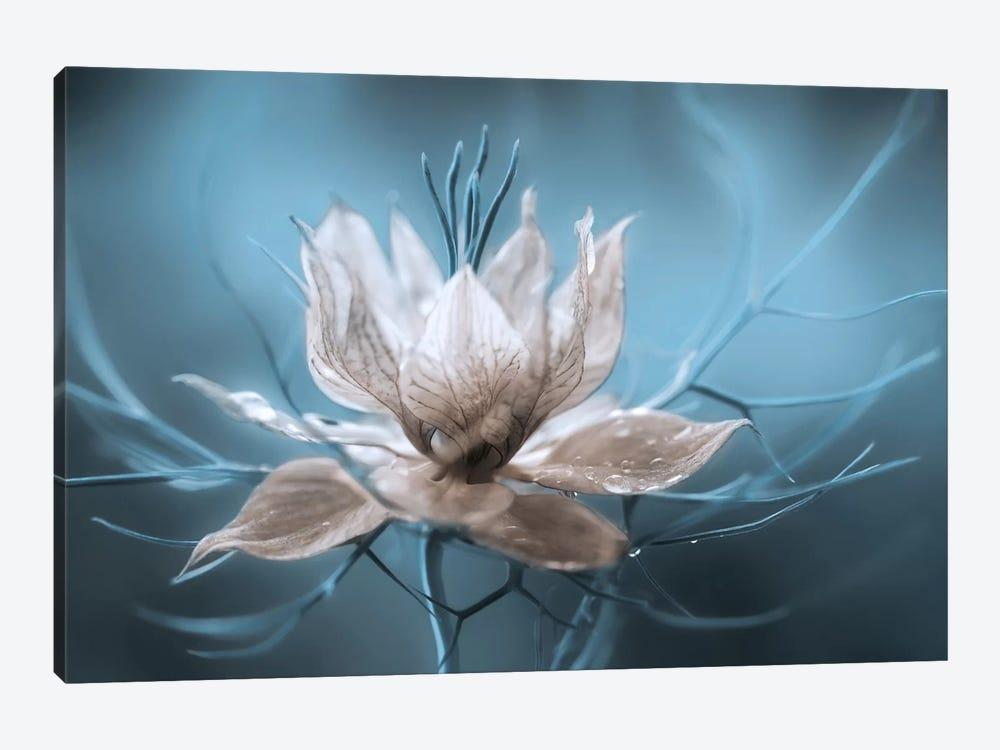 Nigella I by Mandy Disher 1-piece Canvas Art