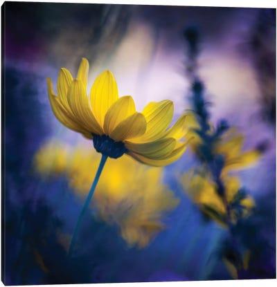 ...From The Dark Garden... Canvas Art Print
