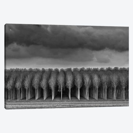Untitled Canvas Print #OXM2833} by Sergio Sberna Canvas Art Print