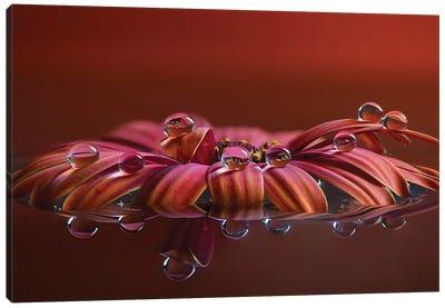 La Giostra Canvas Art Print