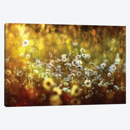 Wonderland Canvas Print #OXM2840} by Stefan Eisele Canvas Artwork