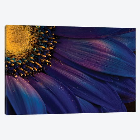 Blue Rays Canvas Print #OXM2848} by Þorsteinn H. Ingibergsson Canvas Artwork