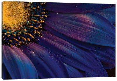 Blue Rays Canvas Art Print