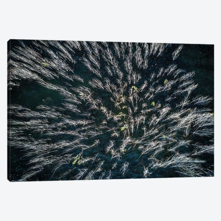 Blue Mangrove Canvas Print #OXM2874} by Zhou Chengzhou Canvas Artwork