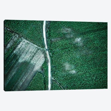 Pure Green Canvas Print #OXM2884} by Zhou Chengzhou Art Print