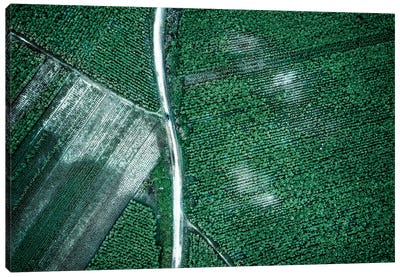 Pure Green Canvas Art Print