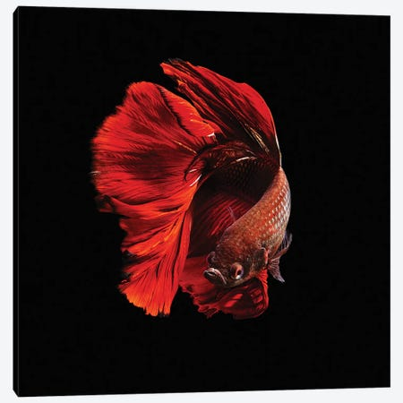 The Red Canvas Print #OXM2907} by Andi Halil Canvas Wall Art
