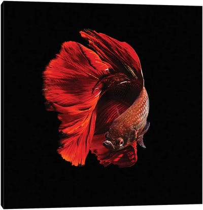 The Red Canvas Art Print