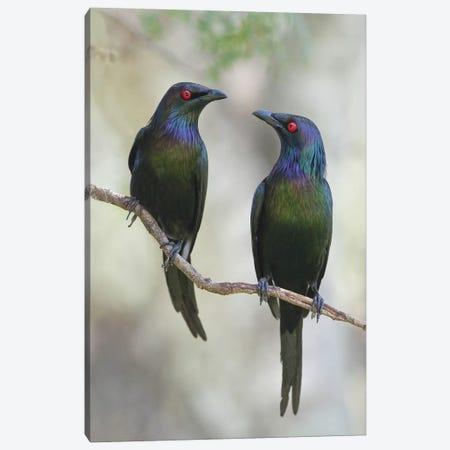 Beautiful Couple Canvas Print #OXM290} by Jacqueline Hammer Art Print