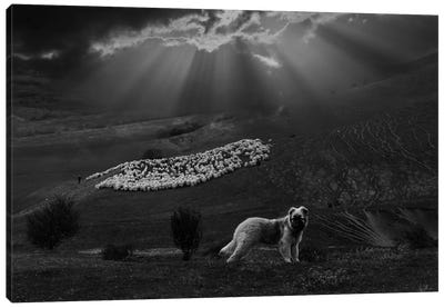 Shepherd Dog Canvas Art Print