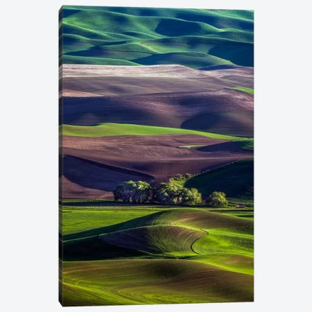 Untitled Canvas Print #OXM2965} by David H. Yang Canvas Wall Art