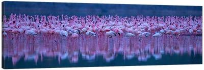 Flamingos Canvas Art Print