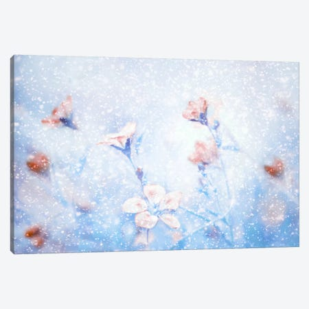 My Winter Garden Canvas Print #OXM2974} by Delphine Devos Art Print