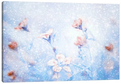 My Winter Garden Canvas Art Print