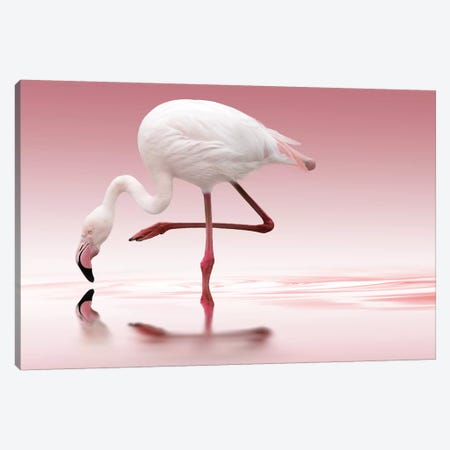 Flamingo Canvas Print #OXM2976} by Doris Reindl Canvas Print