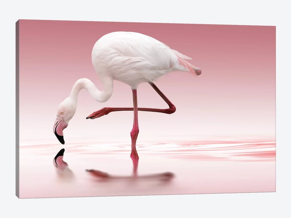 Flamingo by Doris Reindl 1-piece Canvas Wall Art