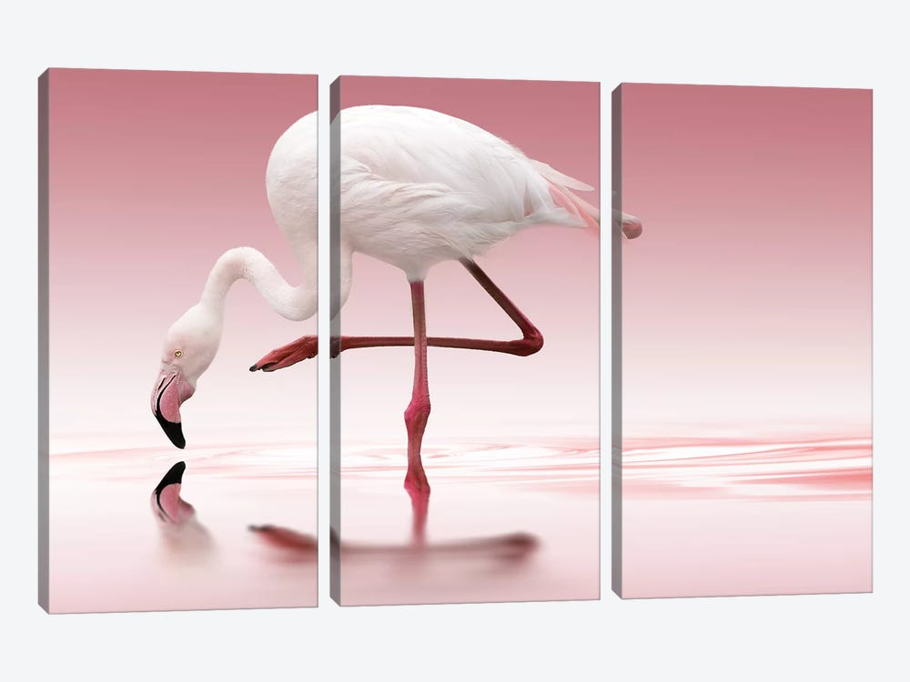 Flamingo by Doris Reindl 3-piece Canvas Art