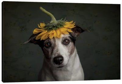Does She Realize She Looks Like A Sunflower.... Canvas Art Print