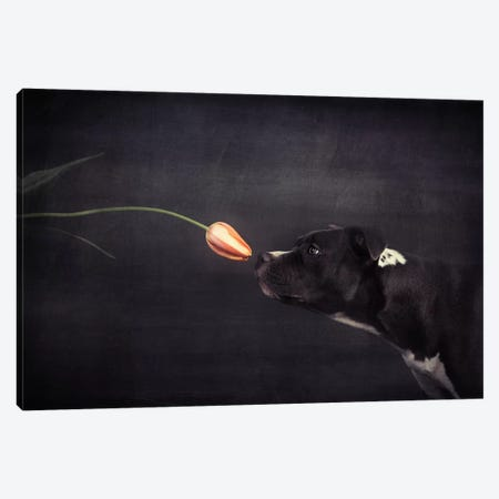 First Approach - Hildegard And The Tulip Canvas Print #OXM3029} by Heike Willers Canvas Art Print
