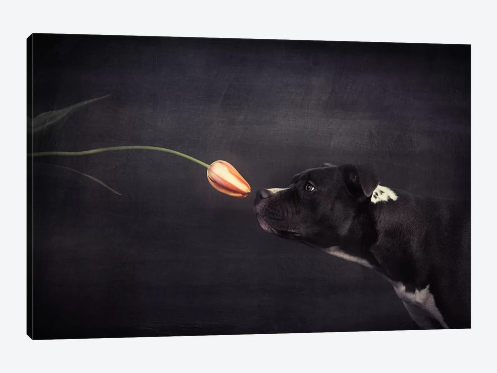 First Approach - Hildegard And The Tulip by Heike Willers 1-piece Canvas Wall Art